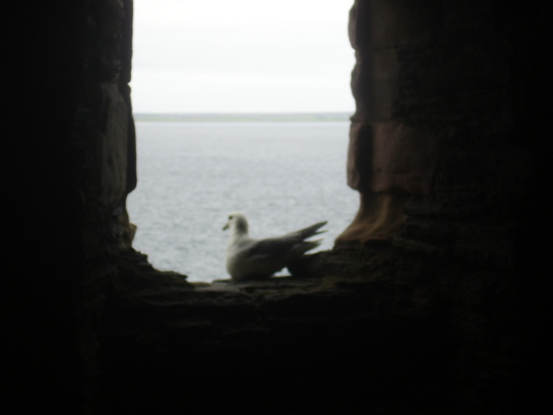 Gull window 3