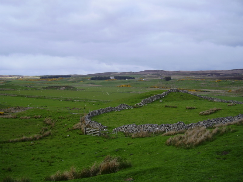 Strath Halladale filled with sheep